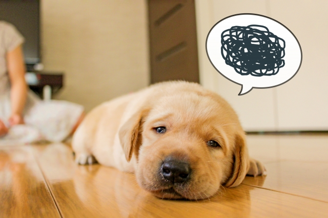 犬がトイレをあちこちでする!?犬の問題行動を徹底分析