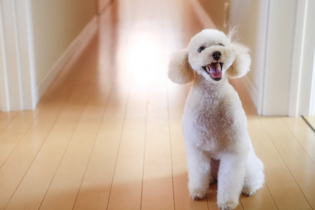 犬がトイレ前でうろうろする理由とは