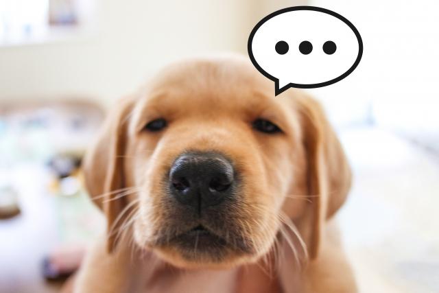 犬がトイレで失敗!怒るのは逆効果だった!?